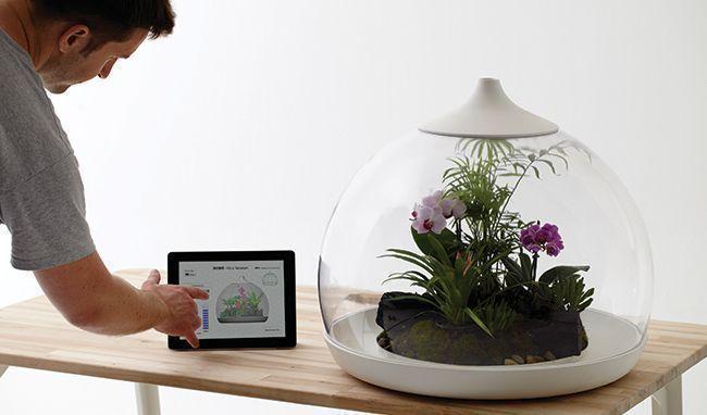 mini jardim de vidro : mini jardim de vidro: smartphones, capaz de controlar clima, nível de água e de nutrientes